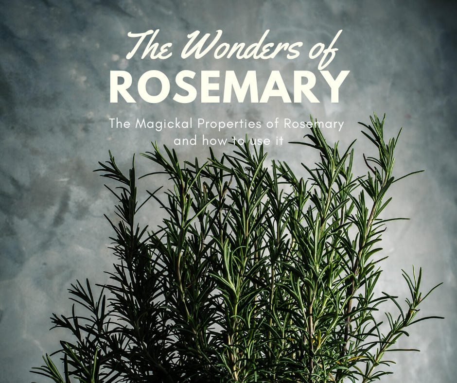 The Wonders of Rosemary Blog Post by Raven Moonlight Botanicals